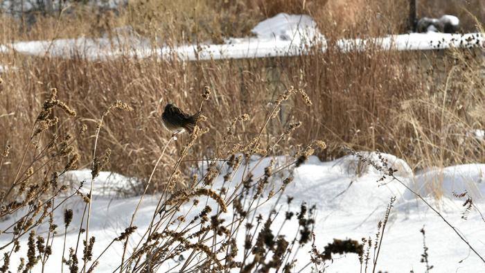 Habitat for birds (Jo ana Kubiak / Lurie Garden)