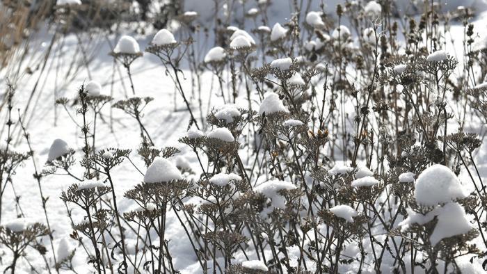 Suspended snow (Jo ana Kubiak / Lurie Garden)