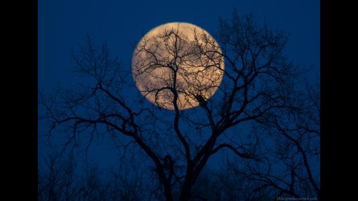 Photo by Mike Zarnek: Supermoon. Taken from Glenview on Sunday 11/13/2016