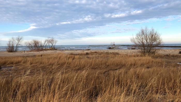 Montrose Beach dunes provides refuge and food to shorebirds. (Patty Wetli / WTTW News)