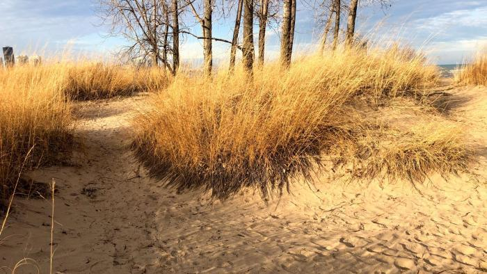 Though Montrose Beach dunes is newly formed, it provides a glimpse of Chicago's pre-settlement shoreline. (Patty Wetli / WTTW News)