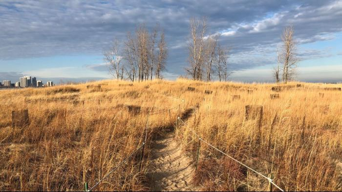 There are defined paths within the dunes to protect plants and wildlife, but the dunes aren't off-limits to visitors. (Patty Wetli / WTTW News)