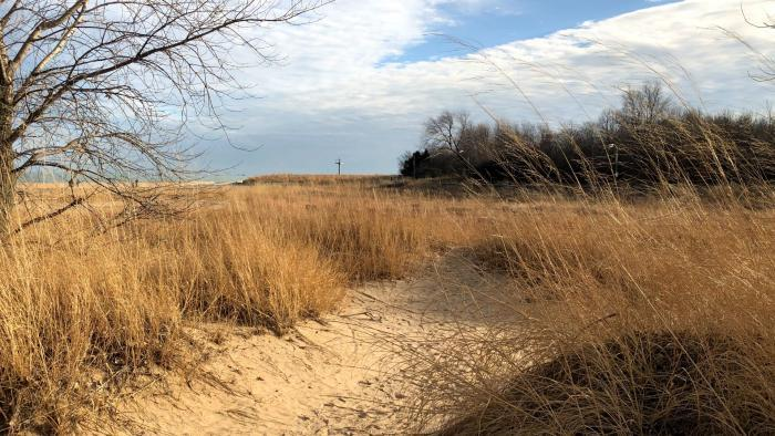 It's easy to forget you're in Chicago when visiting Montrose Beach Dune Natural Area. (Patty Wetli / WTTW News)