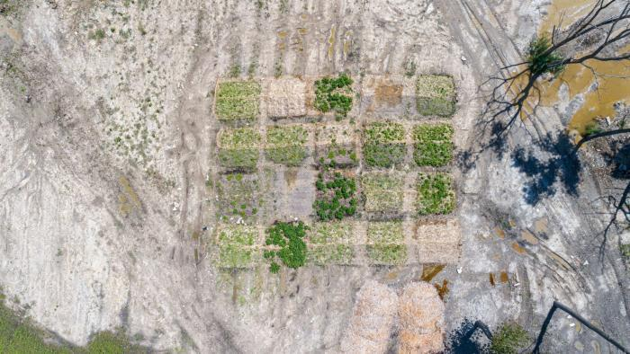 An aerial view of the soil test stands.  Greener doesn't necessarily mean better - it could indicate the growth of invasive species.  (Courtesy of Chicago Park District)