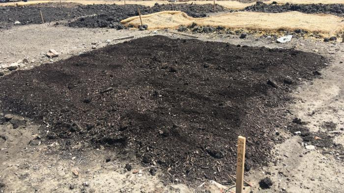 Close-up view of soil test beds. (Courtesy of Chicago Park District)