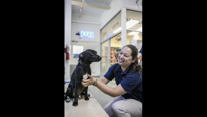 Shedd Aquarium trainer Lana Vanagesem greets Peach at The Anti-Cruelty Society. (Brenna Hernandez / Shedd Aquarium)