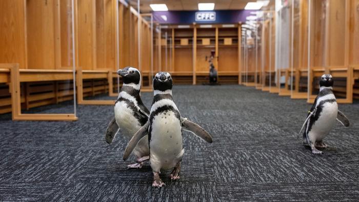 Checking out the Bears' locker room. (Brenna Hernandez / Shedd Aquarium)