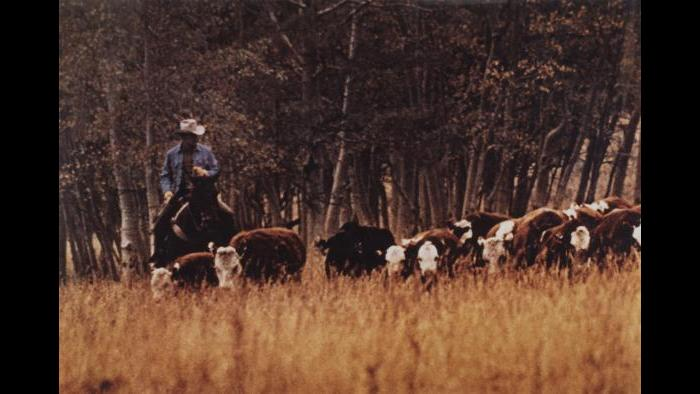 Richard Prince. Untitled (cowboy), 1986. (Courtesy of the Art Institute of Chicago, Gift of Edlis/Neeson Collection)
