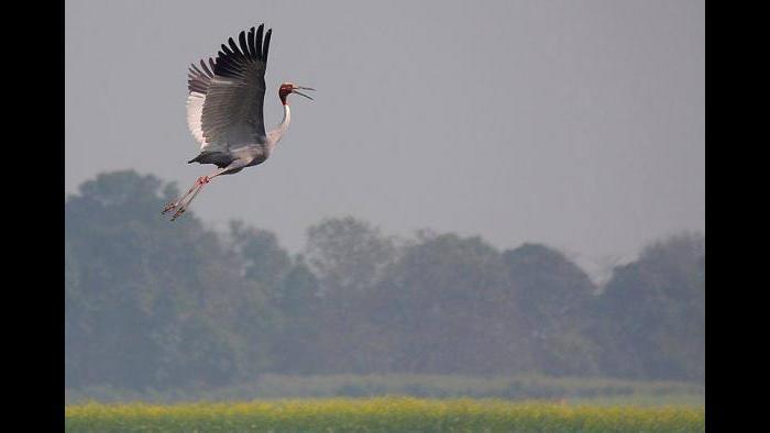 (Photo/Gopi Sundar)