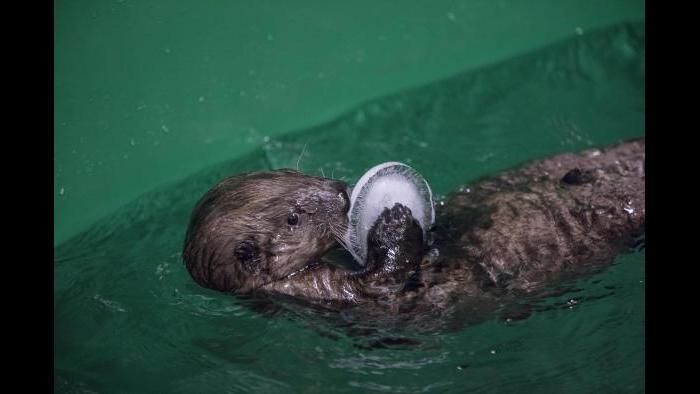 (©Shedd Aquarium/Brenna Hernandez)