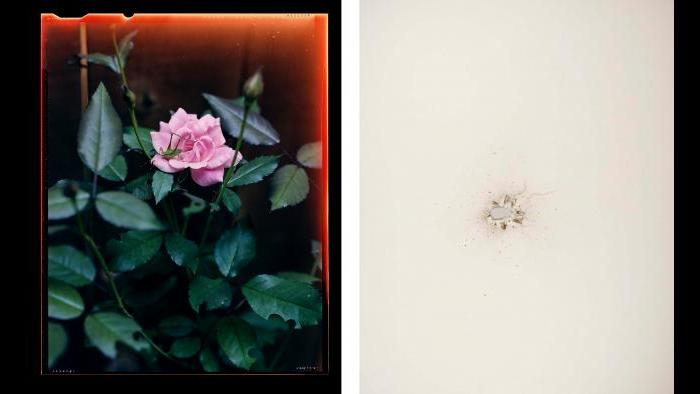 """From left: Guillaume Simoneau, Grasshopper on rose, Kennesaw, Georgia, from the """"Love and War"""" series, 2006; Christian Patterson, Shotgun Blast, 2011."""