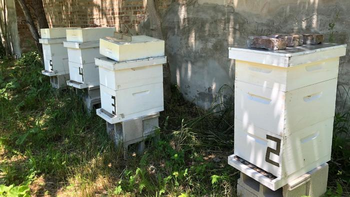 Beehives at the farm. (Patty Wetli / WTTW News)