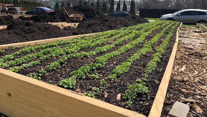 Urban agriculture could transform a neighborhood built in the shadow of the Union Stock Yard. (Patty Wetli / WTTW News)