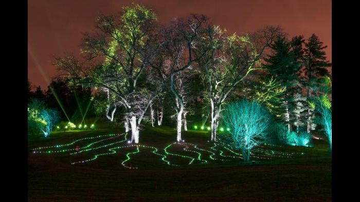 (Courtesy of the Morton Arboretum)