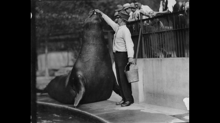 The Sea Lion Pool, built in 1879 and shown here in the 1920s, once served as the zoo's focal point. (Courtesy Chicago Park District and Chicago History Museum)