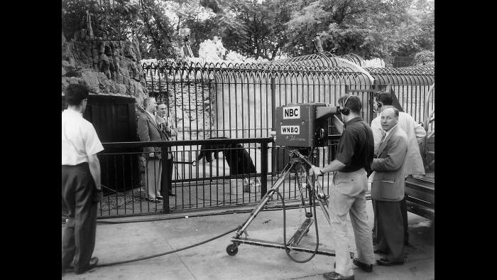 Zoo Parade filming in the 1950s: Lincoln Park Zoo Director Marlin Perkins brings wildlife into households with his TV program, Zoo Parade, headquartered at Lincoln Park Zoo. (Courtesy Chicago Park District and Chicago History Museum)