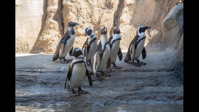 (Julia Fuller / Lincoln Park Zoo)