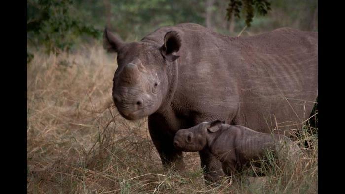 (Courtesy of the International Anti-Poaching Foundation)