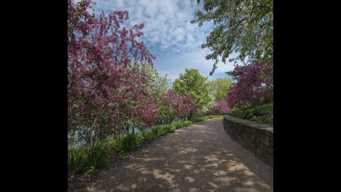 (Courtesy of the Chicago Botanic Garden)
