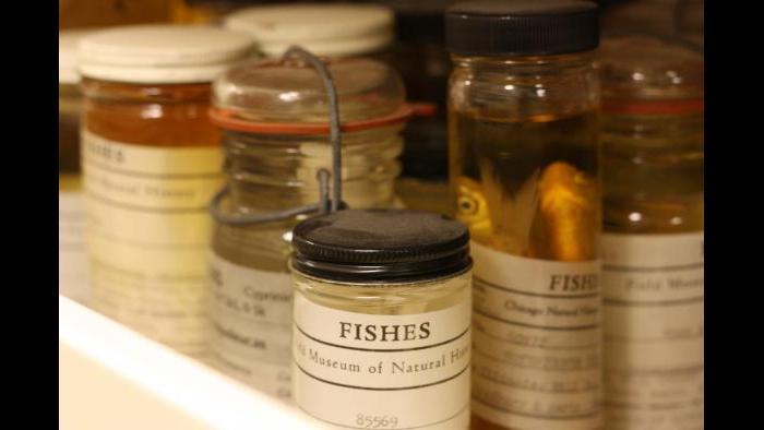 Various fish specimens. (Chloe Riley / Chicago Tonight)