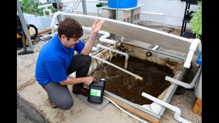 Metropolitan Farms also sells fish dew: nutrient-rich water for home gardeners. (Evan Garcia)
