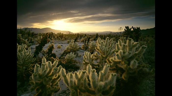 Joshua Tree National Park (Courtesy of QT Luong)