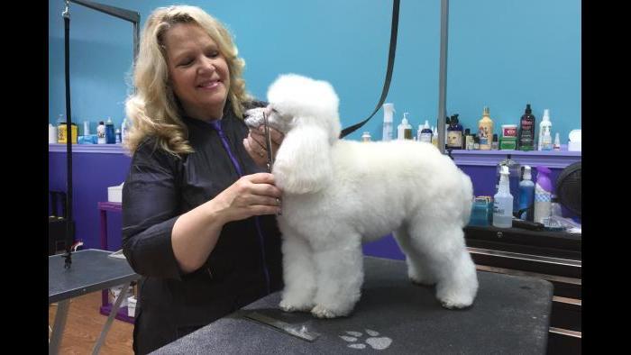 Best Dog Groomer: Jennifer Bishop-Jenkins at Love Fur Dogs