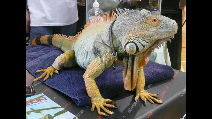 (Courtesy of ReptileFest)