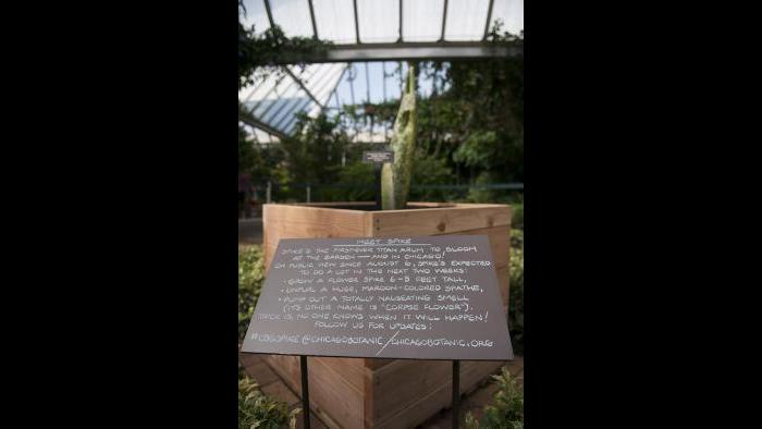 "Sign at the botanic garden introduces ""Spike,"" a titan arum. (Photo courtesy of the Chicago Botanic Garden)"