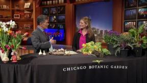 October 03, 2012 - Fall Gardening Tips with Eliza Fournier