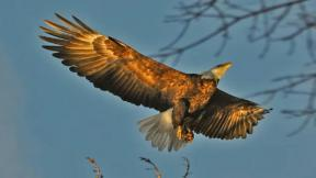 January 14, 2013 - Eagles Land in Chicago Area