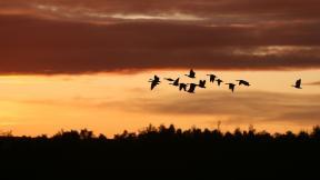 Hundreds of millions of birds are migrating through the U.S. Sept. 3-6. (hollandevens / Pixabay)