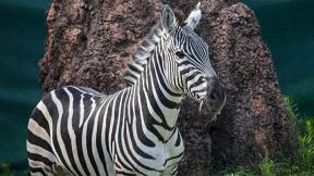 (Lincoln Park Zoo)