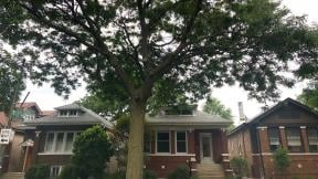 A proposed Urban Forestry Advisory Board would take a more strategic look at one of the city's unsung resources — its trees. (Patty Wetli / WTTW News)