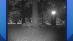 October 8, 2015 - Chicago Wildlife Watch Wants Residents to