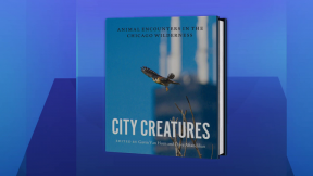 'City Creatures' Details the Animals Among Us